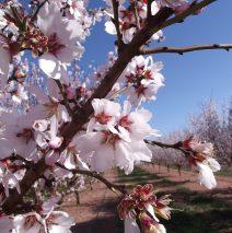 Blossom heralds new season